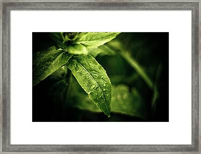 Raindrops Framed Print