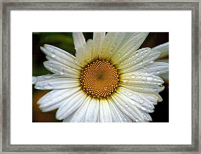 Raindrops On A Daisy Framed Print by Andre Faubert