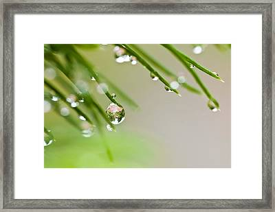Framed Print featuring the photograph Raindrops On Needles by Trevor Chriss