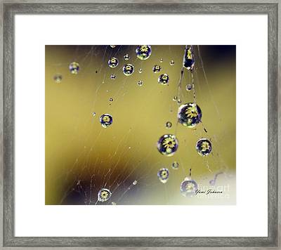 Raindrops On The Spider Web Framed Print by Yumi Johnson