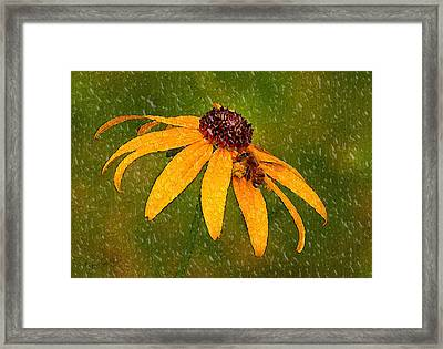 Rained Upon Framed Print
