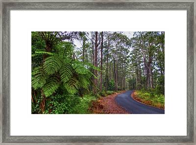 Rainforest - Port Macquarie - Australia Framed Print by Bryan Freeman