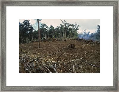 Rainforest Deforestation, French Guiana Framed Print by Thomas Marent