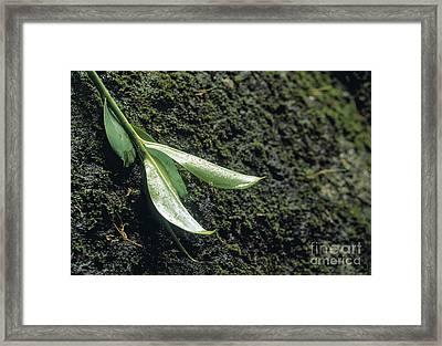Rainforest Framed Print by Juan  Silva