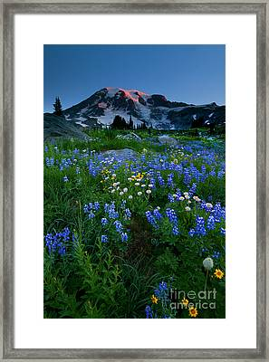 Rainier Wildflower Dawn Framed Print