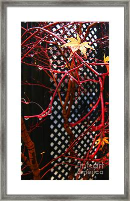 Raining Autumn Leaves Framed Print by Xueling Zou