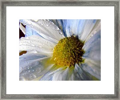 Rainy Daisy Framed Print
