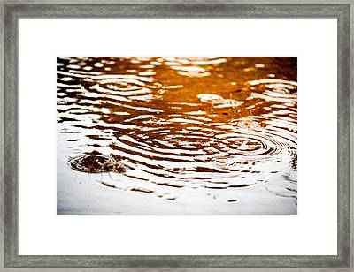 Rainy Day Drops Framed Print by Susan Stone