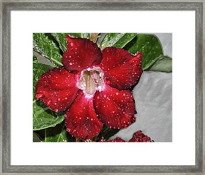 Rainy Day Morning Framed Print
