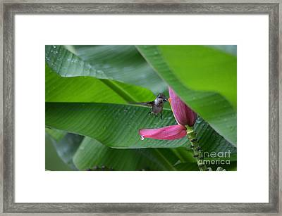 Rainy Days Don't Get Me Down  Framed Print