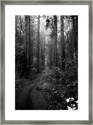 Rainy Forest Framed Print