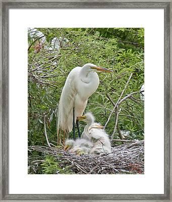 Raising Egrets Framed Print