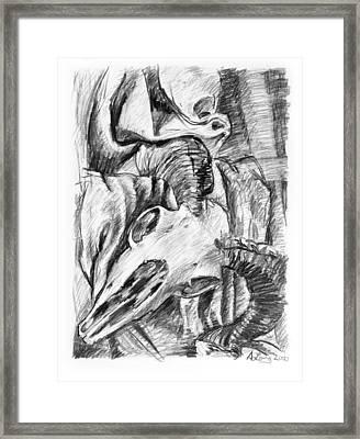 Ram Skull Still-life Framed Print by Adam Long