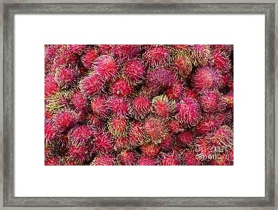 Ranbutan Framed Print by Ed Rooney