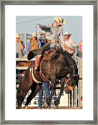Ranch Bronc Rider Framed Print by Rachelle Rice