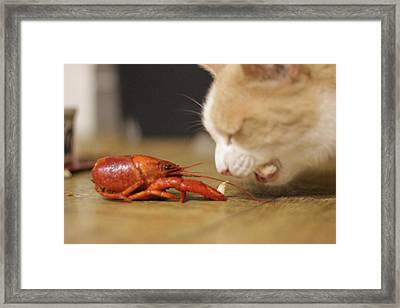 Framed Print featuring the photograph Ranji And Clovis by Rdr Creative