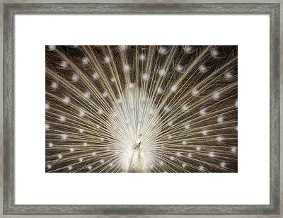 Rare White Peacock Framed Print