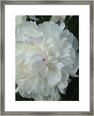 Rarely Perfect Framed Print