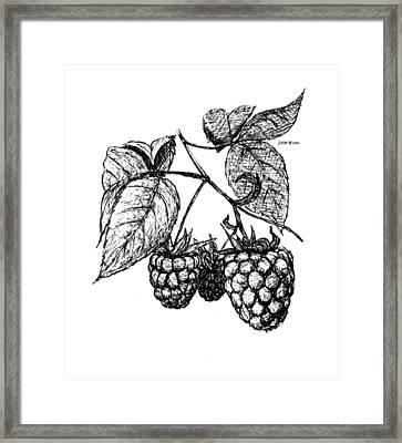 Raspberries Framed Print by Daniel Paul Murphy