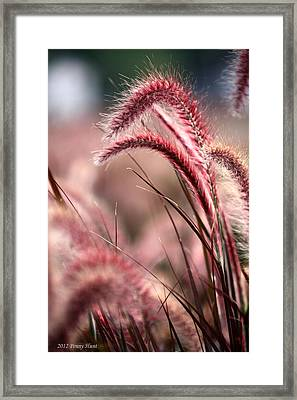 Raspberries With Whip Cream Framed Print by Penny Hunt