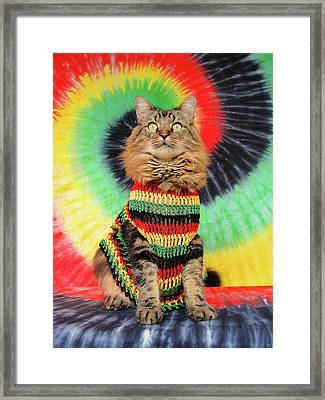 Rasta Cat Framed Print by Joann Biondi