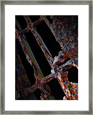 Rat In The Cage Framed Print by Empty Wall