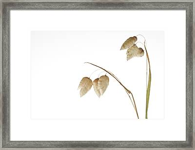 Rattlesnake Grass Number 3 Framed Print by Carol Leigh