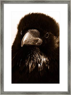 Raven In Black Framed Print by Michael Cinnamond
