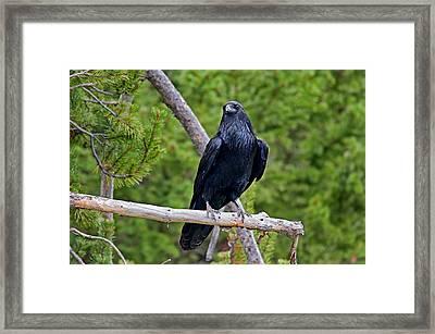 Raven Framed Print by Elijah Weber