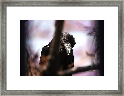 Raven Outside My Window Framed Print