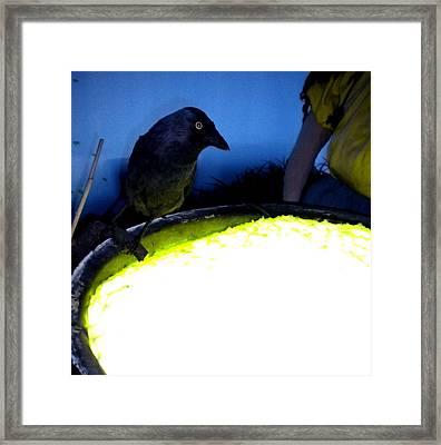 Raven Reflecting  Framed Print by Colette V Hera  Guggenheim