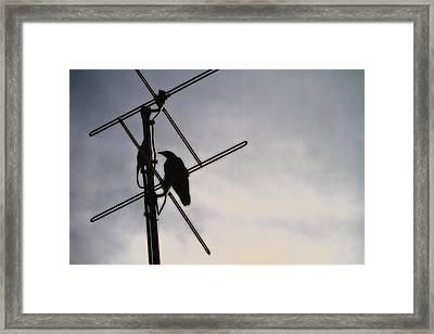 Ravens Perch Framed Print by Karol Livote