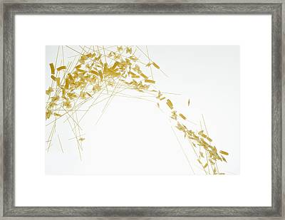 Raw Pasta Against A White Background Framed Print by Dual Dual