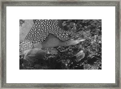 Ray Framed Print by Jean Noren