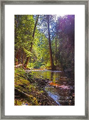 Ray Of Sunshine Framed Print by Nancy Harrison