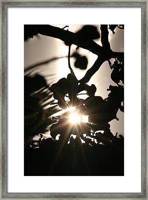 Rays Among The Leaves Framed Print