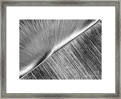 Rays And Lines. Black And White Framed Print