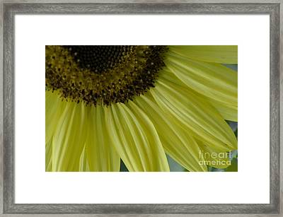 Rays Of Sunshine Framed Print by Tamera James