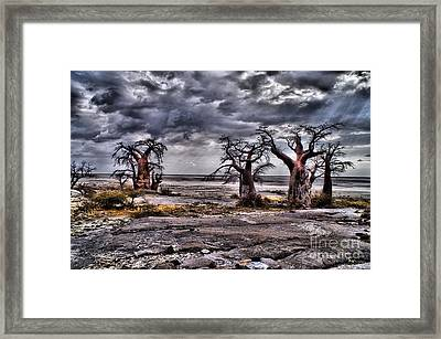 Rays On The Baobabs Framed Print