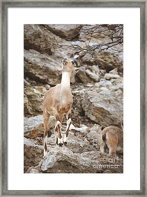 Reach Framed Print by DiDi Higginbotham