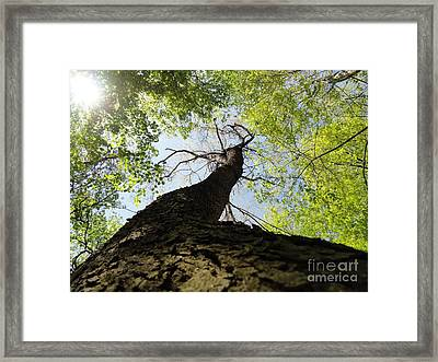 Reach For The Sky Framed Print by Elizabeth Hernandez