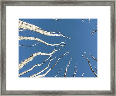 Reach High Framed Print by FeVa  Fotos