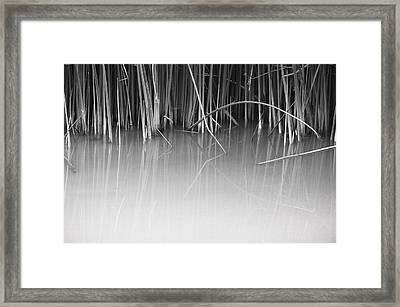 Framed Print featuring the photograph Reach by Kevin Bergen