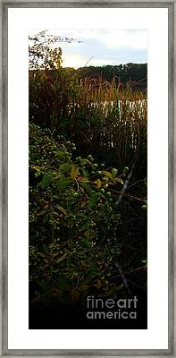 Reach Out Framed Print by Steven Lebron Langston