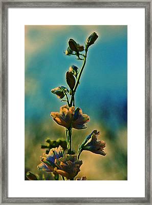 Reaching Blooms Framed Print by Bill Tiepelman