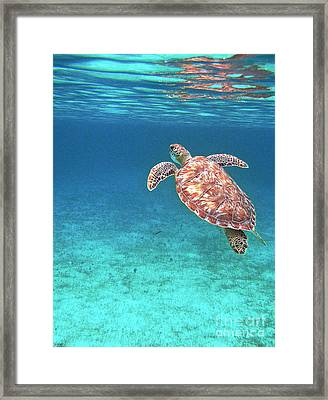 Reaching For Air Framed Print by Li Newton