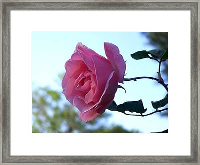 Framed Print featuring the photograph Reaching For Sunlight by Kathy  White