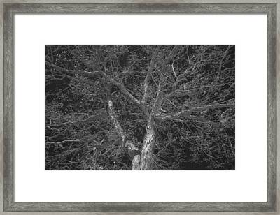 Reaching For The Midnight Sky Framed Print