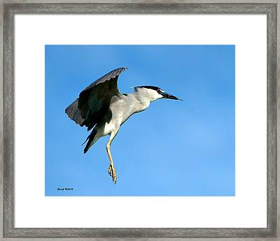 Reaching For The Nest Framed Print by Stephen  Johnson