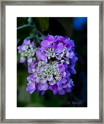 Framed Print featuring the photograph Reaching Into Purple by Cheri Randolph